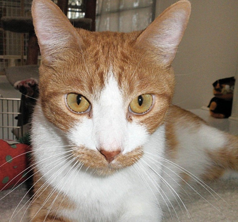 Someone to love: Oliver