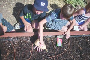 Ahwatukee Community Garden Project