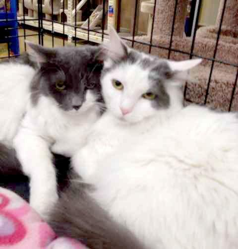 Someone to love: Molly and Prince