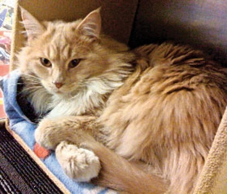 Pet of the Week: Tigger Two
