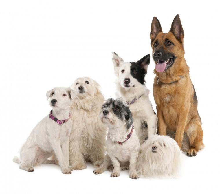 How to integrate multiple dogs into your pack
