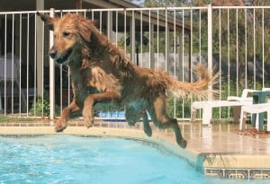 Dock diving: The X-games for dogs