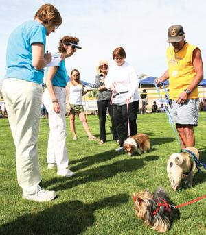 Ahwatukee Dog Show this weekend