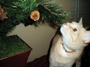 Holiday safety, travel tips for pets