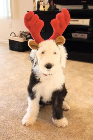 Keeping your pets happy and healthy this holiday season
