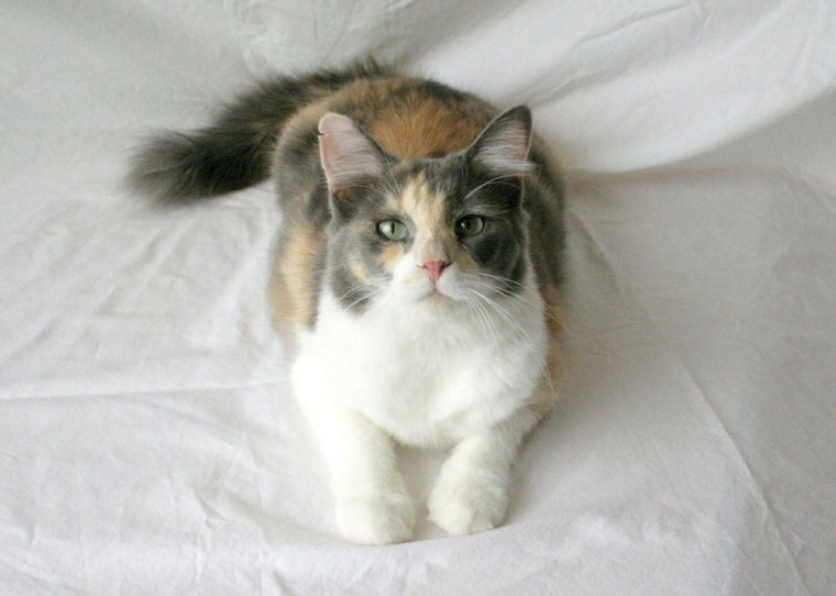 Someone to love: Patches