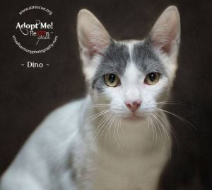 Someone to love: Dino