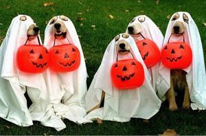 A howlin' Halloween