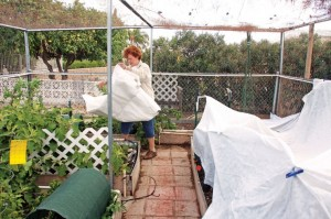 Snow flurries fall in West Valley, homeowners protect plants from frost