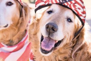 Pet-safe July 4