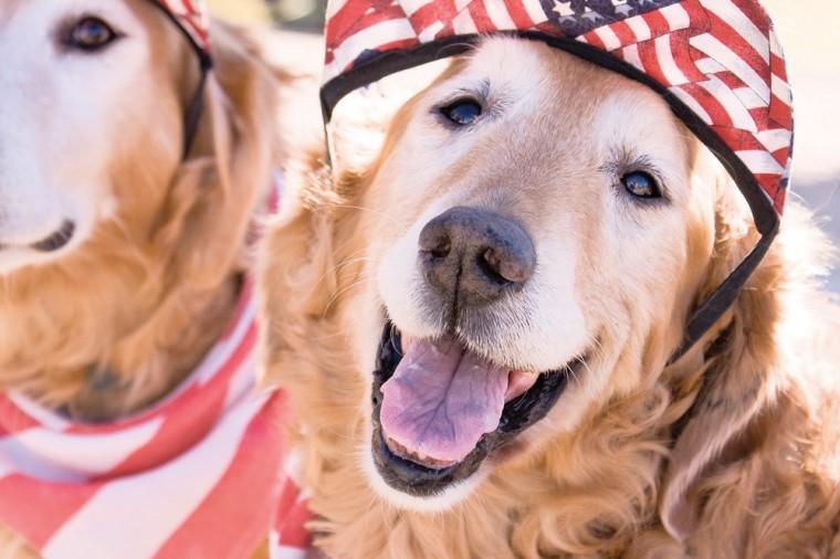 Pet-safe July 4
