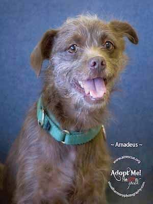 Someone to love: Amadeus