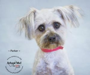 Someone to love: Parker