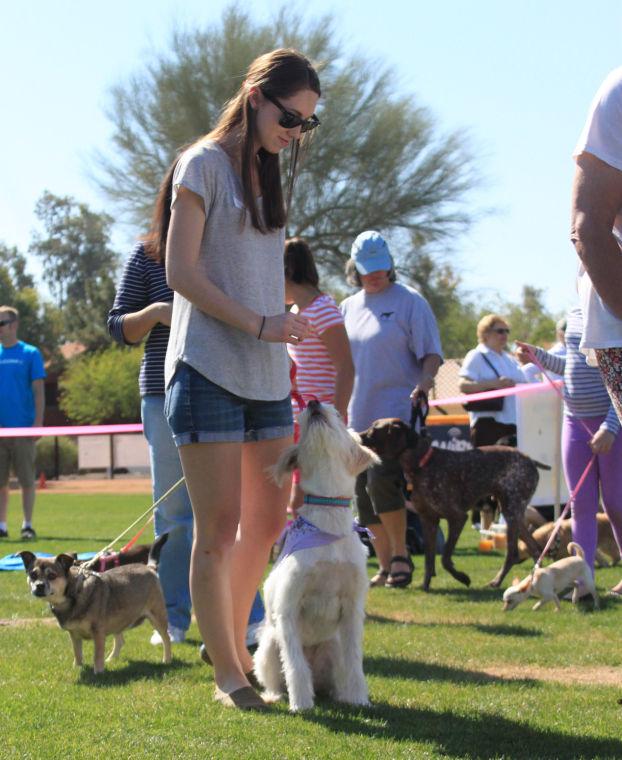 Ahwatukee Family Dog Show