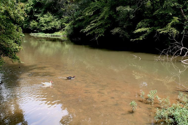 Relax! at Choccolocco Creek