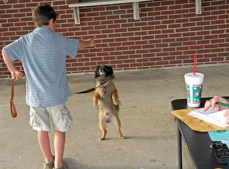 Bark in the Park 16