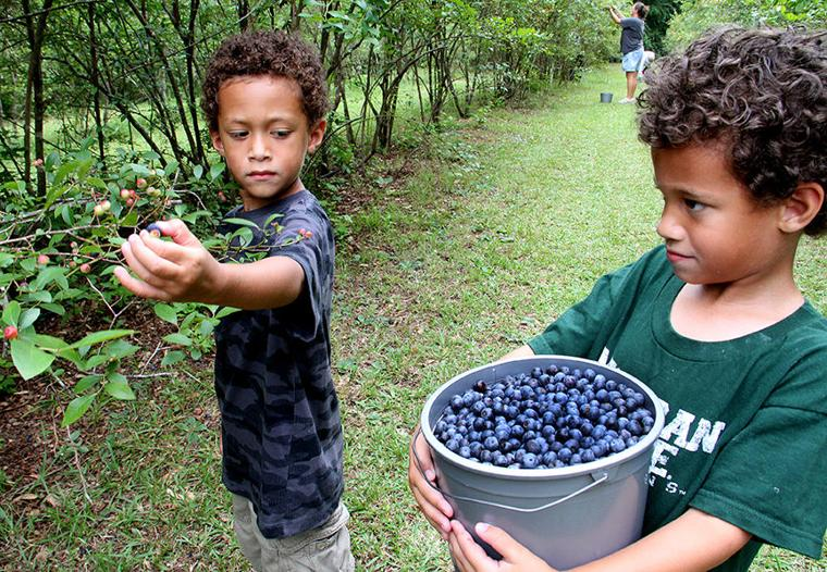 Pickin' for a cause at Jerry's Berries 3