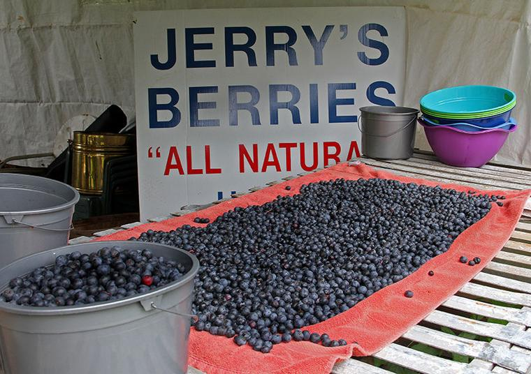 Pickin' for a cause at Jerry's Berries 9