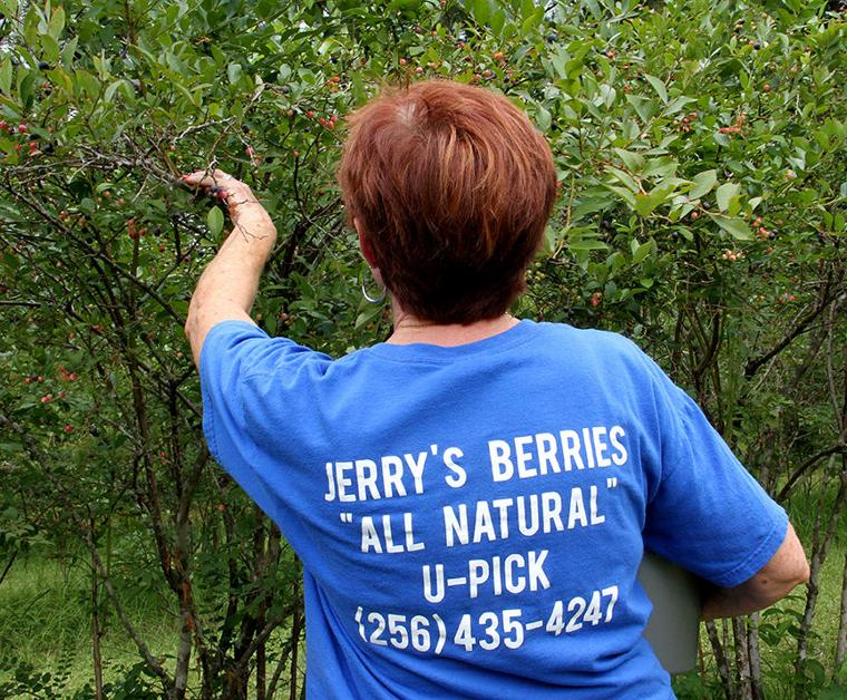 Pickin' for a cause at Jerry's Berries 12