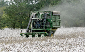 Cotton Amendment