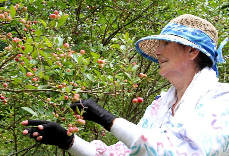 Pickin' for a cause at Jerry's Berries 14