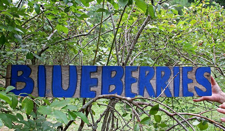 Pickin' for a cause at Jerry's Berries 19