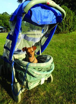 DIY Dog Stroller
