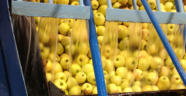 From  apples to onions