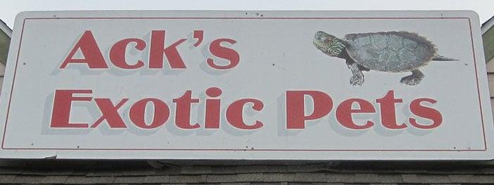 ack's exotic pets auburn