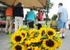 Nutrition: Tully farmer at Auburn market specializes in music garlic