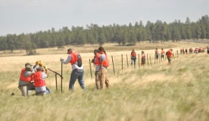 Helping the pronghorn to cross the road safely