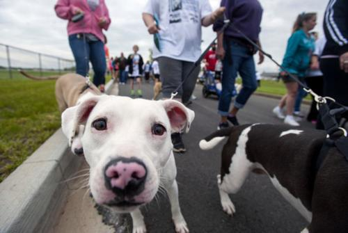 Humane society annual 5K raises $16,500