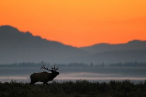 Incident inflames criticism over Teton elk hunt
