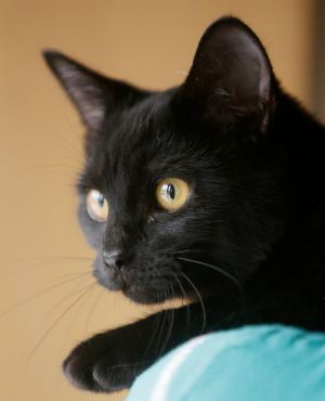 Seger, a black kitten, is pet of the week