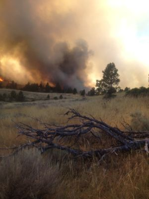 Hysham wildfire eats up 500 acres