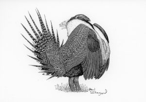 Sage grouse talk Oct. 30 in Bighorn, Wyo.