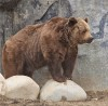 Bruno the bear to stay at ZooMontana; other bears likely to be moved