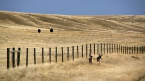Billionaire brothers buying Montana ranches