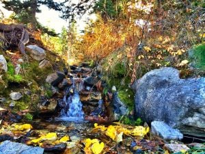 Reader gallery: Fall photos