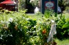 Tatiana Heckles' garden