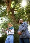 Cooperative effort preserves cottonwood's genes