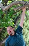 Billings wins 'Tree City' honors