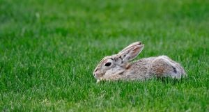 Police looking for people who darted rabbits, left them to die