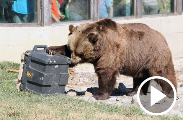 Underriner Motors ZooMontana Bear Cam