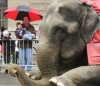 Elephants at Skypoint