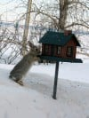 Rabbit eating out of feeder