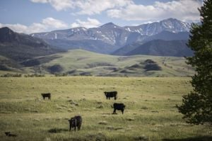 Yellowstone uses Cody-area beef providers for select burger in the park