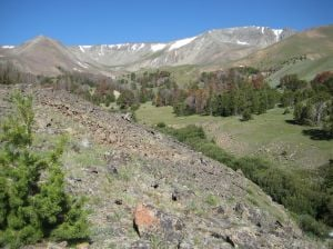 Shoshone forest plan revision calls for more protection