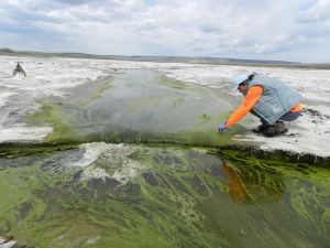 Microbiologist examines ways to improve refuge's contaminated soil