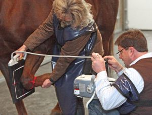 Neighs and yeas: Wyoming vet and world-class equine surgeon opens Billings clinic